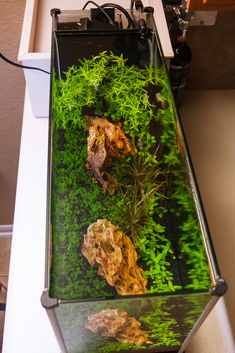 view from above of Planted Fluval Aquarium