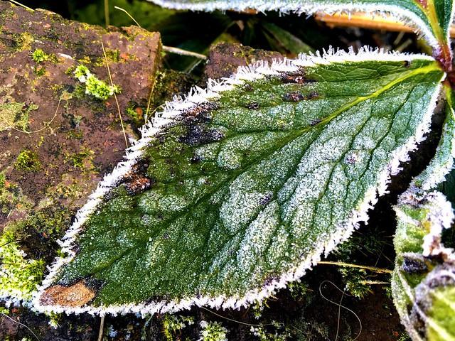 Frosty Leaf, Apple iPad Pro, iPad Pro back camera 4.15mm f/2.2