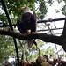 Small photo of American Eagle