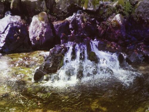 白川水源區內可見湧泉水源源不絕。翻攝自講師投影片。
