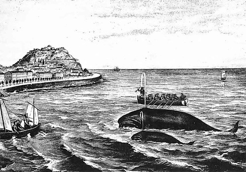 早期可能在比斯開灣(Bay of Biscay)的捕鯨情形。圖片來源:Aguilar, A. 1986學術文章。