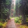 Trail near Moraine Lake in Banff.