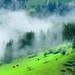 Spring Mist by Mengzhonghua