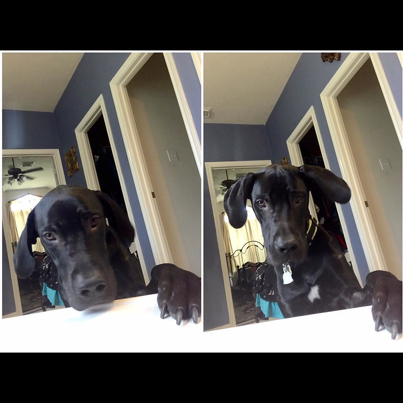Relaxing & reading in the tub and look up to this sweet face!! He love his momma - always by my side! #kub #GreatDane #GentleGiant