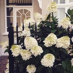 I love this hydrangea