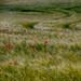 The Field by MattSnapsPhotography
