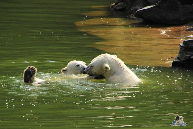 Tierpark Berlin 18.07.2015 08