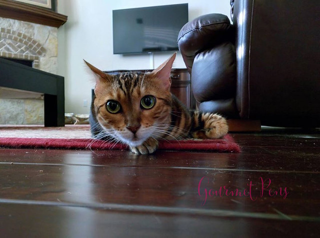 Whiskers & Paws April 2016 Edition (1)