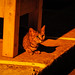 Today's Cat@2015-08-04 by masatsu