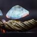 Mushroom by aurelienminozzi