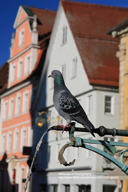 Schwäbisch Gmünd, dove