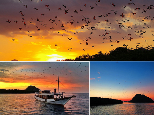 Pulau Kalong - Gambar 1