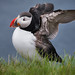The Puffin Lundi by Extreme Iceland