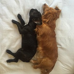 Synchronized napping.