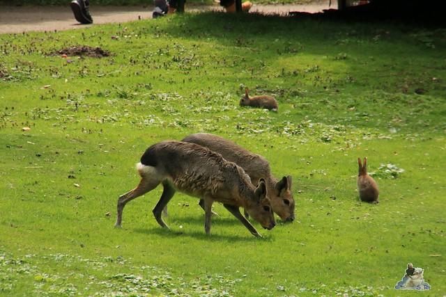 Tierpark Hagenbeck 25.07.2015 06
