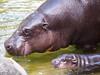 Melbourne Zoo 0715 P7249279A by sophbax22