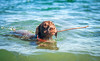 439 Piper swimming with her stick by The_Little_GSP