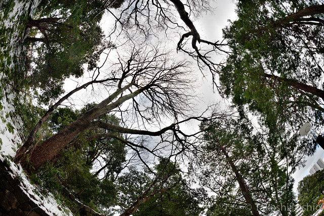 look up trees