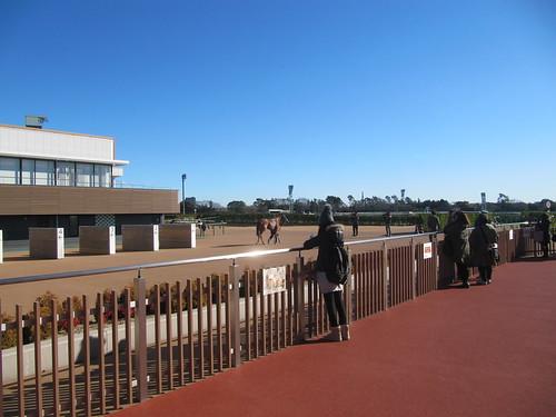 中山競馬場のグランプリロード