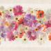 Language of Flowers by Harold Davis