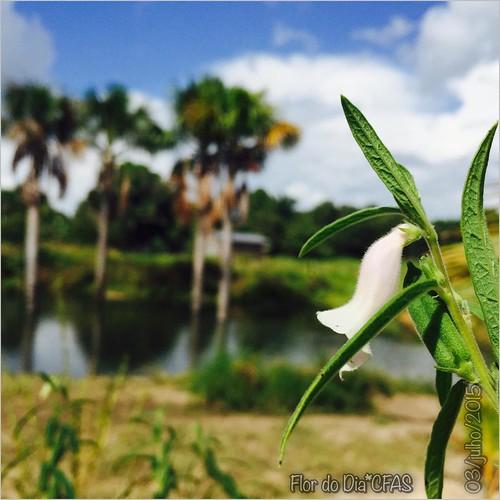 #BomDia #FlorDoDia Gentem, #amuuu encontrar flor nova! Amuuu mais ainda os efeitos conseguidos com a lente do celular , sem qualquer efeitos. E com uma natureza dessa, nem precisa filtro, né?!?! Essa é uma das paisagens naturais que caracterizam a cidade