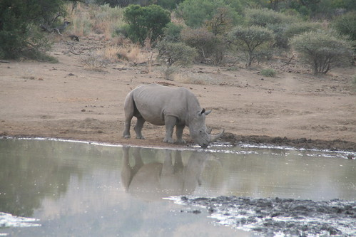 Rhino hydration time