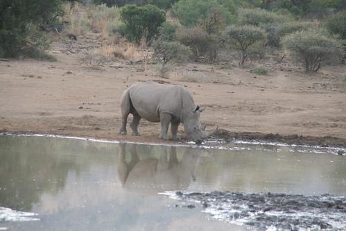 Rhino hydration time