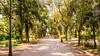 Rome Villa Borghese - Italy 4K Wallpaper / Desktop Background by Loek Janssen