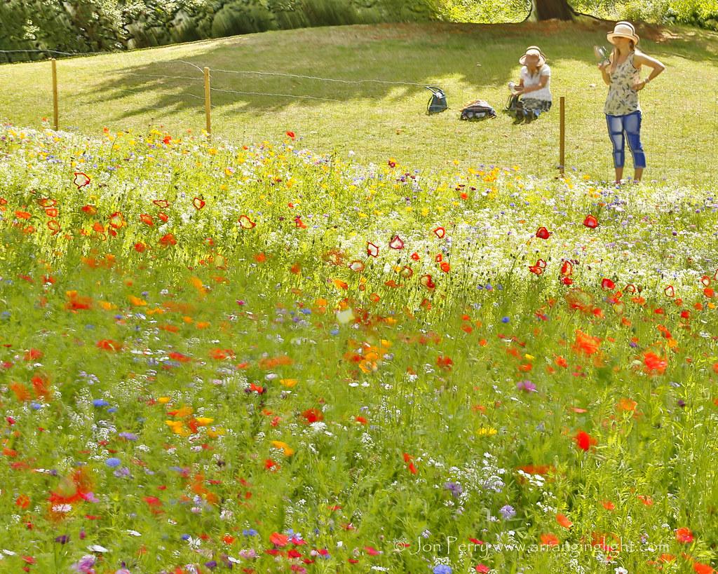 _C0A4398REW Appreciating Summer, Jon Perry - Enlightenshade, 2-8-15 zan