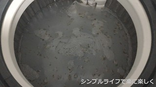 洗濯槽掃除1
