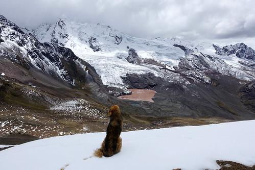 "peru andes andean mountains mountain ausangate trek trekking october 2016 camping camp nevado ""ausangate trek"" ""south america"" cusco ""nevado ausangate"" tinki lakes lagunas lake laguna palomani pass ""palomani pass"""