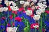 HRD French Flower Field