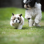 Your Best Shot 2015 - Cats & Dogs