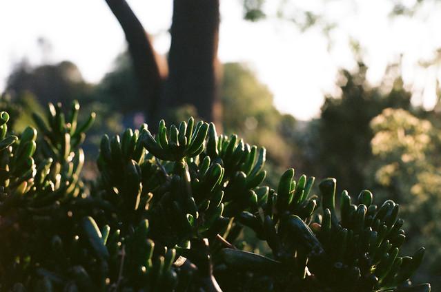 beautiful jade