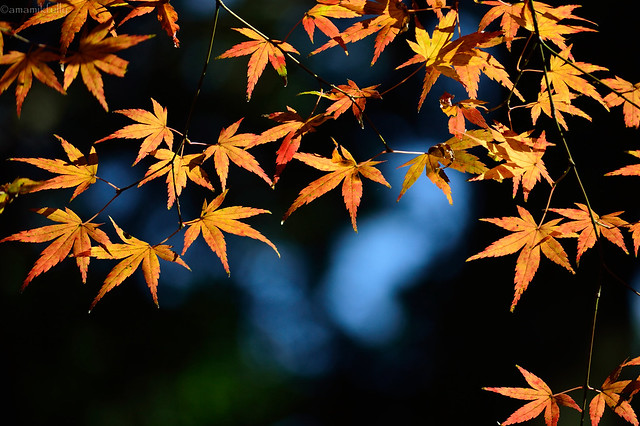 森の中の紅葉