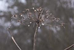 Lindauer Moor Jahreszeiten
