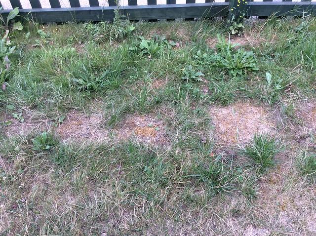 Unhappy lawn