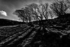 Tree shadows by Paul T McDowell Photography