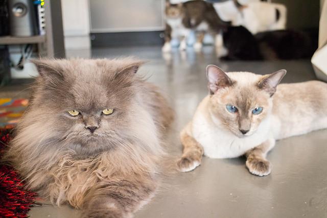 cat family 02