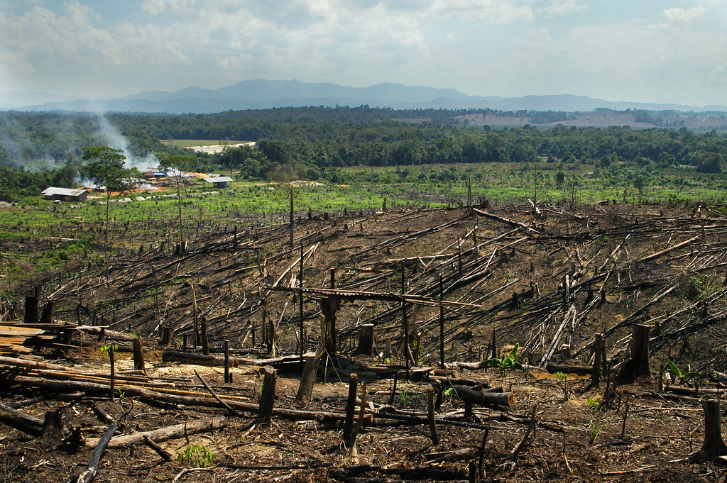 Cheap Oil Changes >> Burning rainforest on Sumatra to make space for palm oil plantations, Indonesia | GRID-Arendal