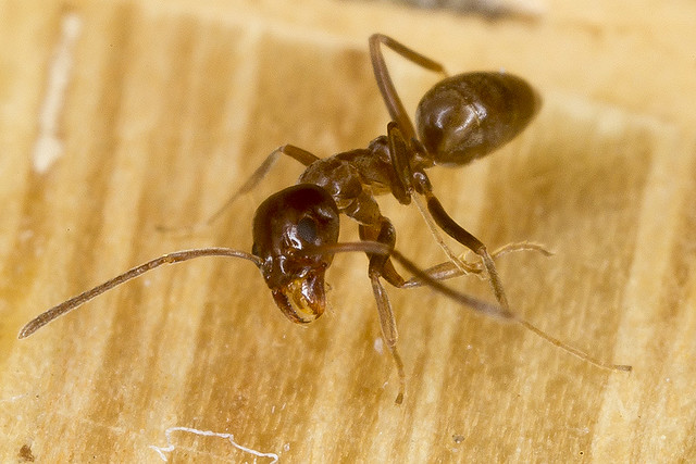 8/365  Ant