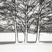Three trees by giulio.cengarle