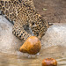 Gourd Play - The Rebound by helenehoffman