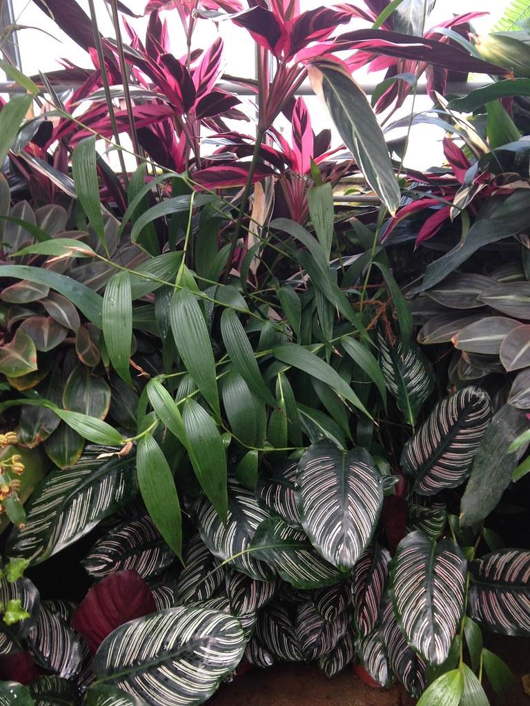 Orchidarium de Prangins 19307365585_68ede8e27b_b