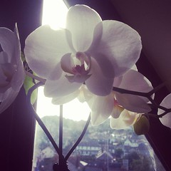 Feel like @allanjenkins21 posting the morning beauty of blooming orchids
