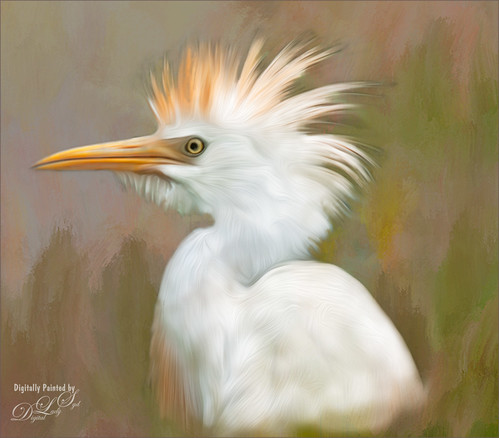 Image of Cattle Egret using Photoshop's Oil Paint Filter