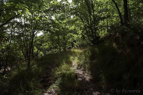Un semplice bosco