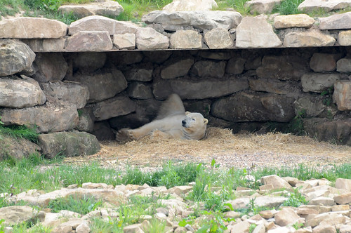 Eisbär Viktor im Yorkshire Wildlife Park