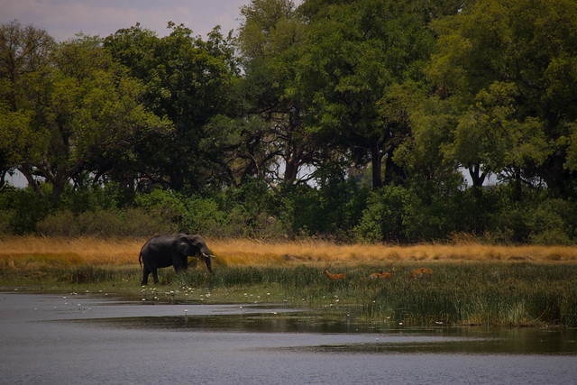 Elephant across the lagoon