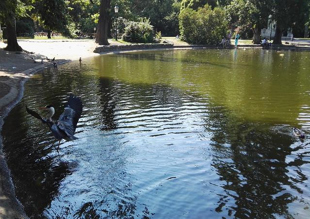 Der Reiher im Teich